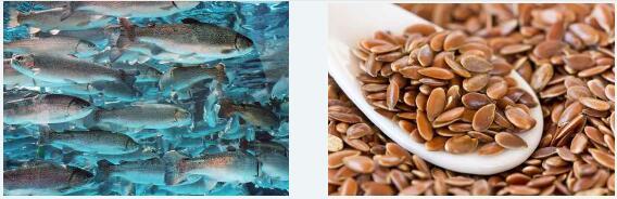 欧米伽3的动物源性和植物源性哪个好